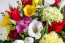 Bouquet of Freesias, Carnations and Tulips