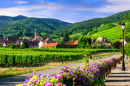 Wine Route, Alsace Region, France