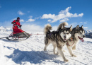Sled Dogs in the Alps