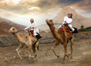 Camel Races in Khadal, Oman