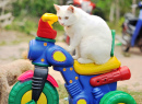 White Kitten on a Toy Motorcycle