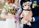 Cute Dog at the Wedding