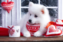 Valentine Samoyed Puppy Dog