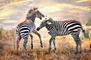 Wild Zebra in the African Grasslands