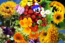 Bright Summer Flowers and Berries
