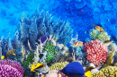 Corals and Fish in the Red Sea