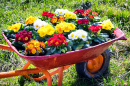 Flowers in an Old Cart