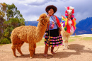 Peruvian Lady with her Alpacas