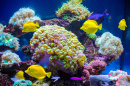 Tropical Fish and Corals