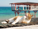 Cat on the Seashore