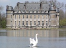 Swan Lake, Castle of Beloeil, Belgium