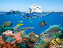 Tropical Fish and Coral Reef, Red Sea