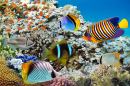 Coral Reef and Tropical Fish, Red Sea
