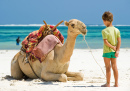 Kid and Camel On the Beach