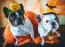 Bulldogs in Halloween Costumes