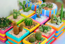 Cacti In Colorful Pots