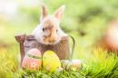 lapin de Pâques puzzle sur TheJigsawPuzzles.com