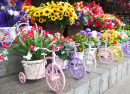 Flowers in Bicycle Pots