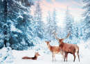 Family of Noble Deer in a Winter Forest
