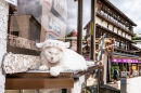 Sleeping Cat, Chiba, Japan