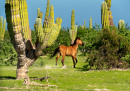 Wild Horse in Baja California Sur
