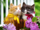 Kittens in a Basket with Flowers