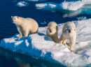 Mother Polar Bear with Cubs