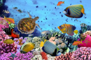 Coral Reef with fishes and Sea Turtle