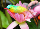 Bird on a Lotus Flower