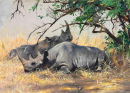 Two Rhinoceros Resting