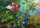 Bullfinch and Blueberries