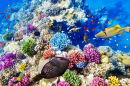 Wonderful Underwater World