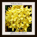 yellow ixora puzzle on TheJigsawPuzzles.com