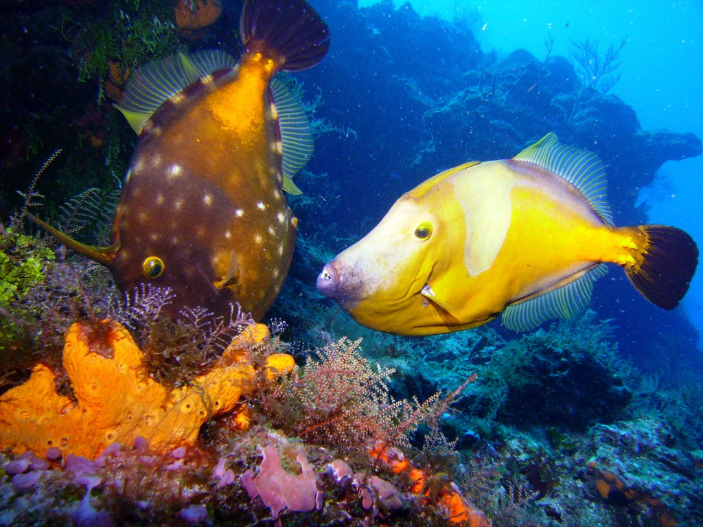 The fish in cozumel mexico jigsaw puzzle in under the sea for Fish in mexico