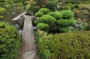 Japanese Traditional Style Garden