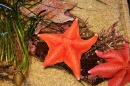 Star Fish, Monterey Bay Aquarium