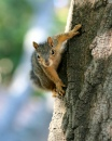 Squirrel in Walnut Creek, CA