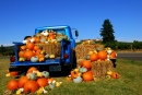 King Estate Winery Pumpkin Harvest