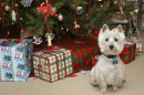 Wee Westie Christmas puzzle on TheJigsawPuzzles.com