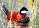 Duck Stamp Art Contest